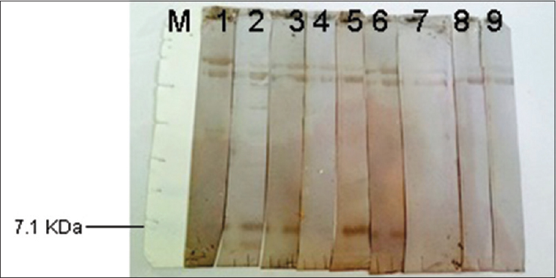 Figure 3: Western immunoblotting of cyst wall probed with the sera of patients with hydatid cyst (1–7) or normal human sera (8 and 9). M stands for molecular weight marker